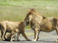 О состояниях, происходящих из ссор отца с матерью