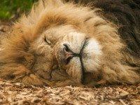Как улучшить условия  для ночного сна, что конкретно делать перед сном