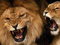 Как успешно иметь дело с агрессивными и контролирующими людьми. Часть 1.