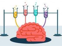 «Мозг: краткое руководство. Все, что вам нужно знать для повышения эффективности и снижения стресса»