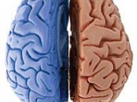 """«Правое - левое»  (др.названия """"Художник или мыслитель?"""", """"Ведущее полушарие мозга"""")"""