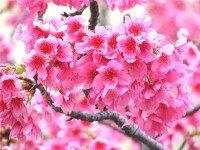 Психология цветов