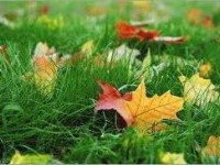 Не нравится осень?