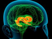 Личностные расстройства и их психологические механизмы