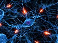 Ученые обнаружили ген депрессии